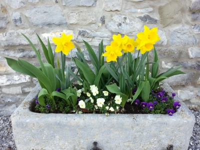 Les fleurs sont là