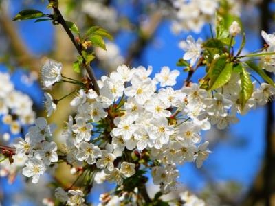 Bloemen voor lente